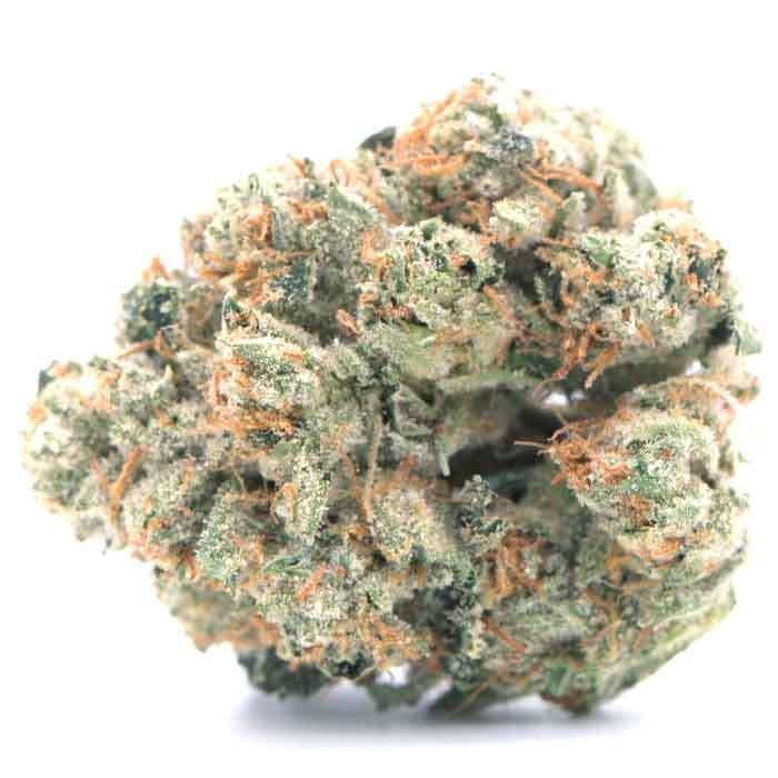 Source Cannabis   Platinum OG